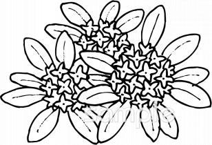 沈丁花 庭木イラストなら小学校幼稚園向け保育園向けのかわいい