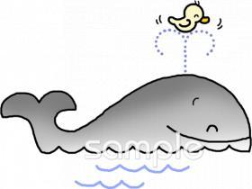 クジライラストなら小学校幼稚園向け保育園向けのかわいい無料